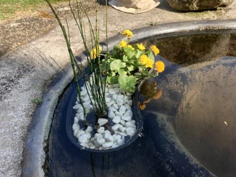 Bepflanzte Teichschale (c) Foto von Susanne Haun
