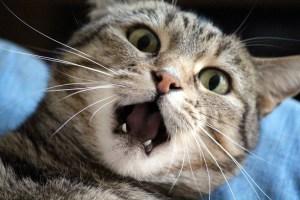 cat-1370024_1920