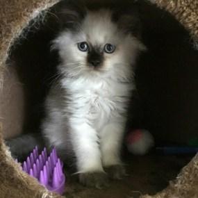 Mollie, 8 weeks