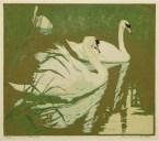 Botke | Swans