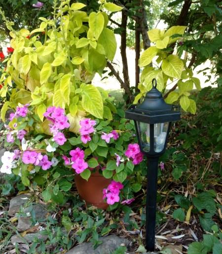Solar Garden Lanterns Light Up Fall Nights