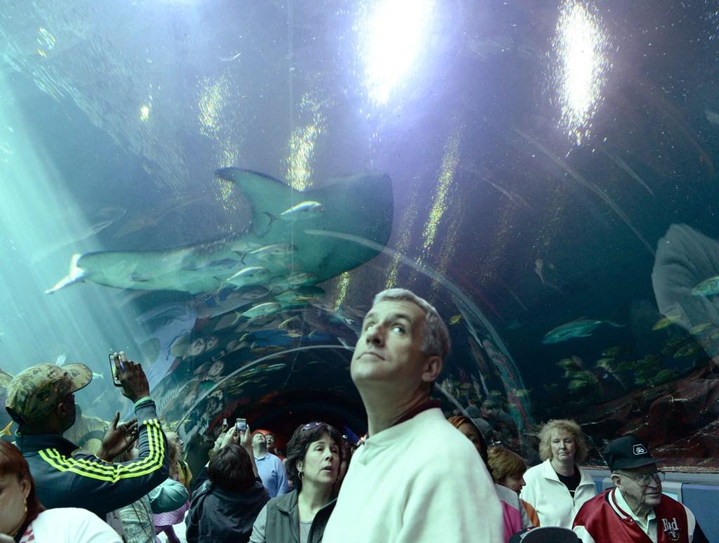 Atlanta Aquarium fish tunnel