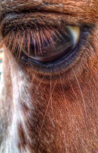 eye_of_horse