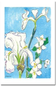 White Iris Card by Susan Sternau