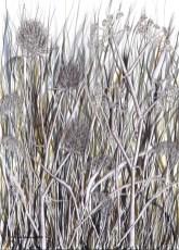Grasses X