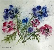 anemone-ii