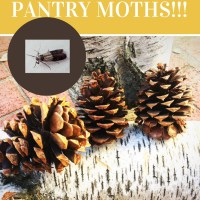 The PANTRY MOTHS ARE BACK!!!