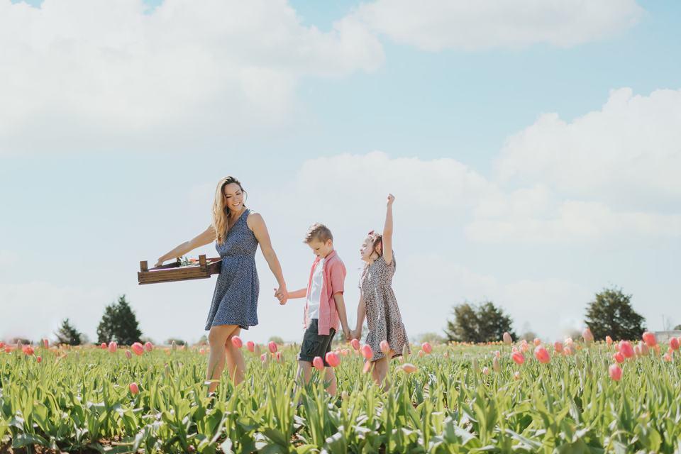 tulip flower farm