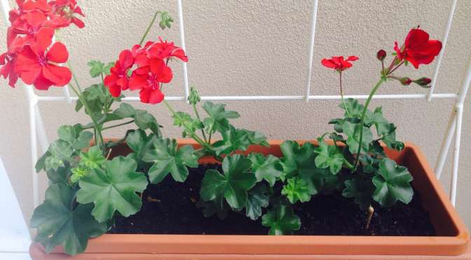Garden Delights…Retro Planter with Red Geranium