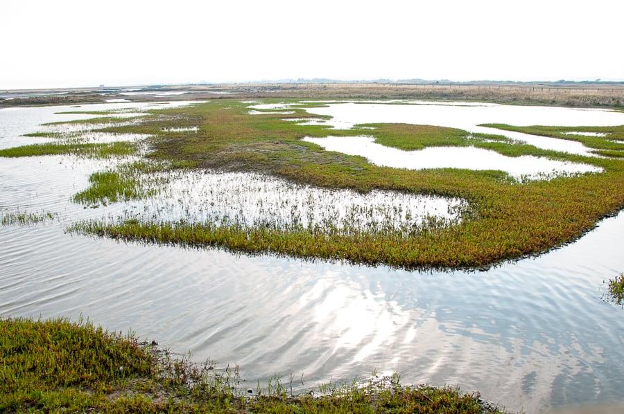 Rye Nature Reserve