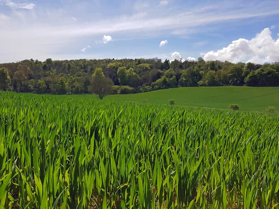 Farmland near Eartham, West Sussex