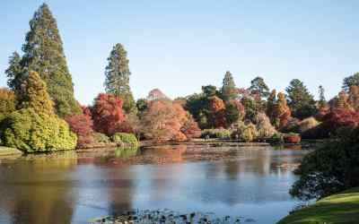 Autumn foliage at Sheffield Park Gardens