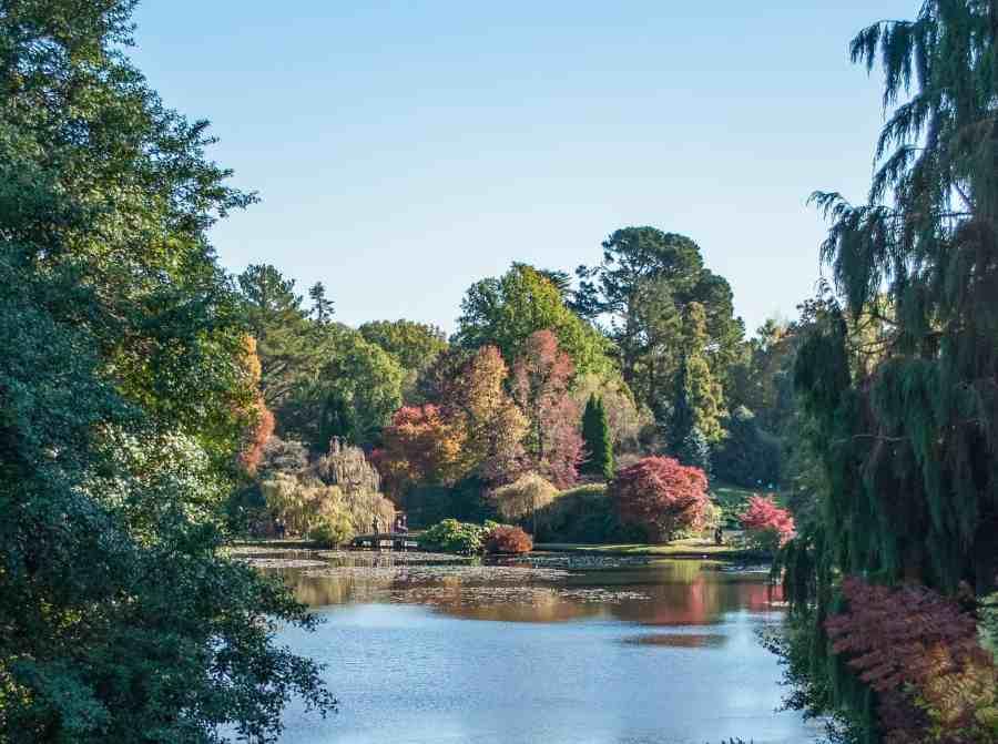 Autumn Foliage, East Sussex