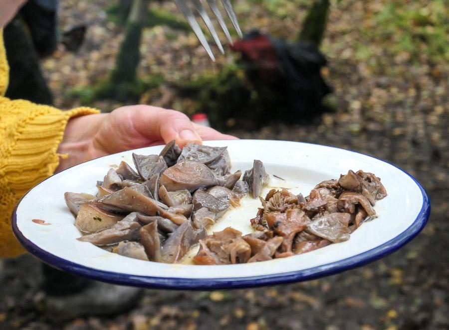Mushroom tasting