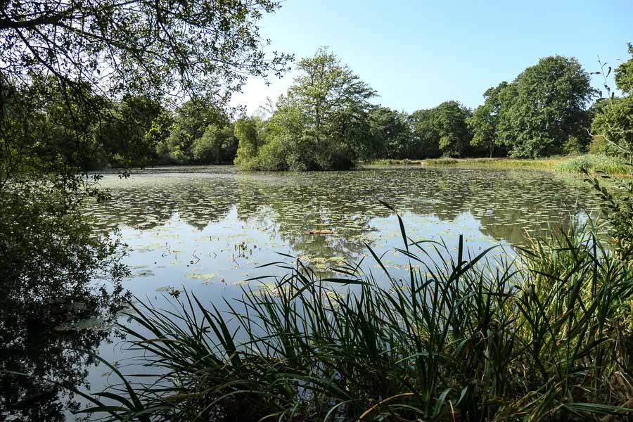 Lake at Battle Abbey