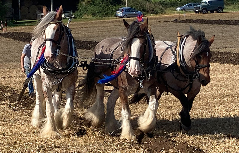 Sussex Ploughing Match