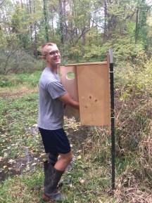 Ignas installing a wood duck box