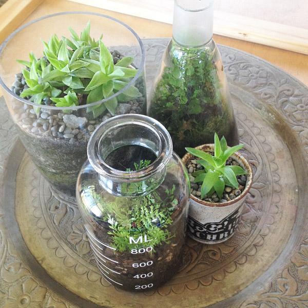 terrariumplanted_group