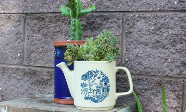 DIY: Upcycled Potted Plants
