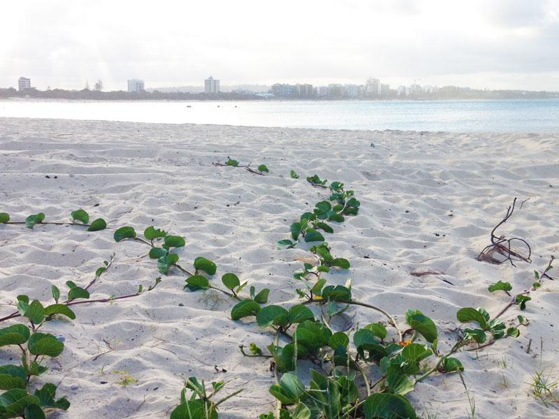 thrive_beach