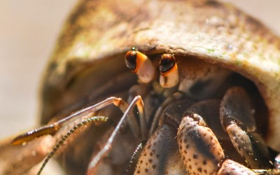 Symbols for Sustainability: The Hermit Crab