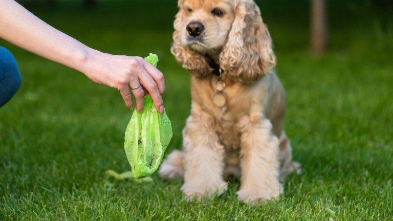 How Long Do Biodegradable Dog Poop Bags Take to Decompose?