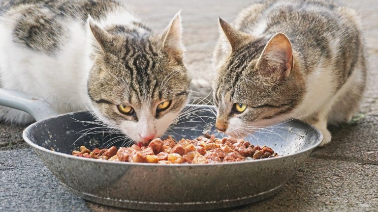 Which Types of Pet Food Containers Can Be Recycled?