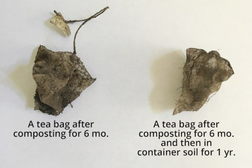 A photo of a tea bag made with plastic fibres which has not broken down even after one and a half years.