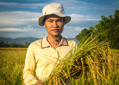 farmer with rice
