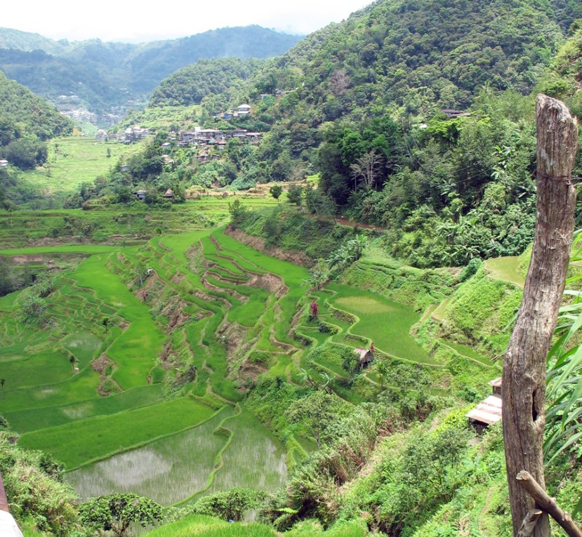 Steep terraces of green rice with mountains behind