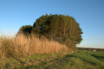 grasses and trees on edge of farm field