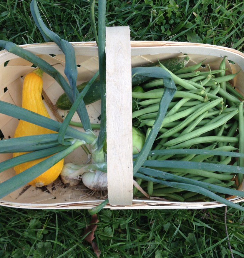 Basket with yellow squash, green onions and green beans