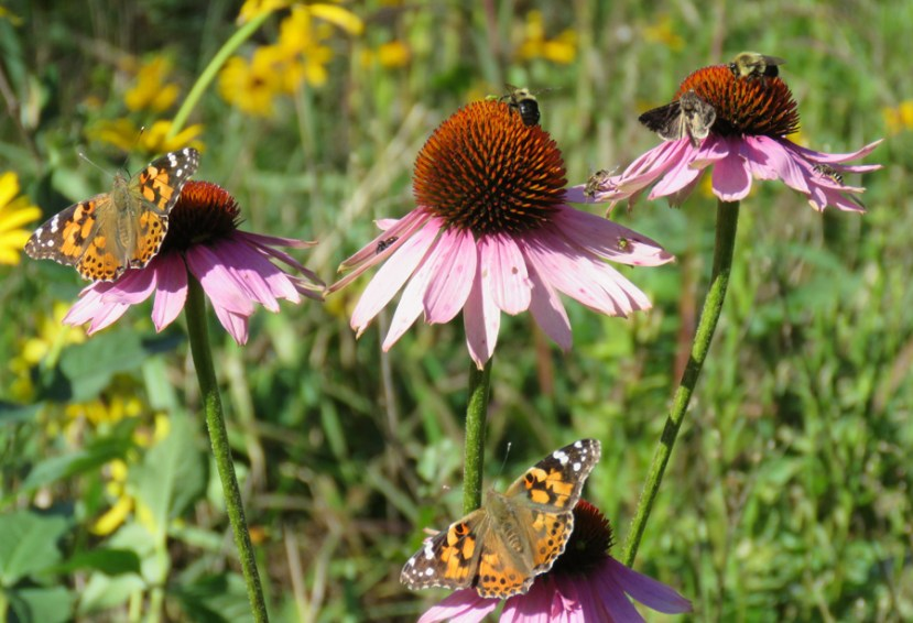 flowers with bees and butterflies