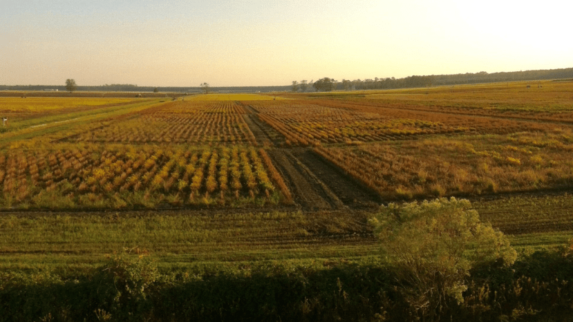 many different types of soybeans in a field