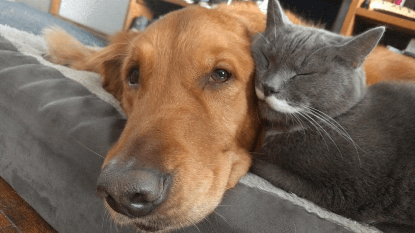 dog and cat cuddling on dog bed. Pyrethrum can be used in dog shampoos