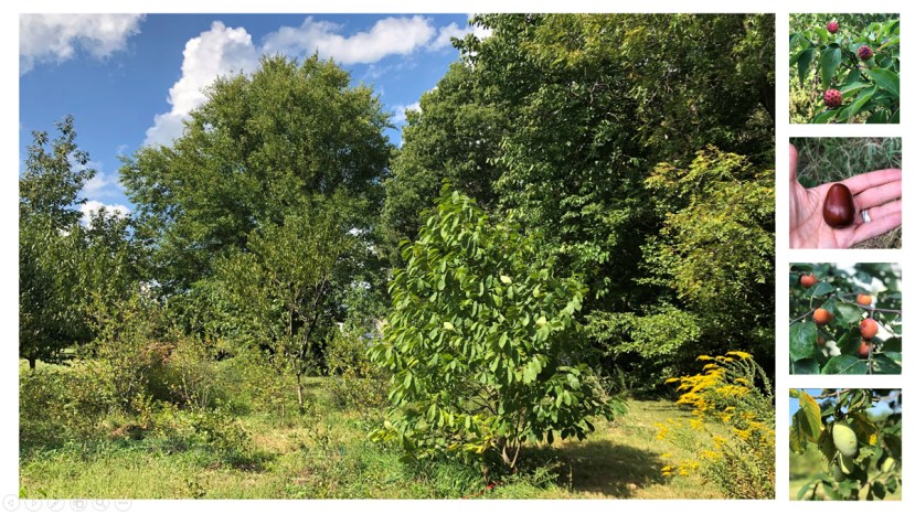 various trees in a park with sky in the background. Four separate photos on the right side showing different fruit trees produce.