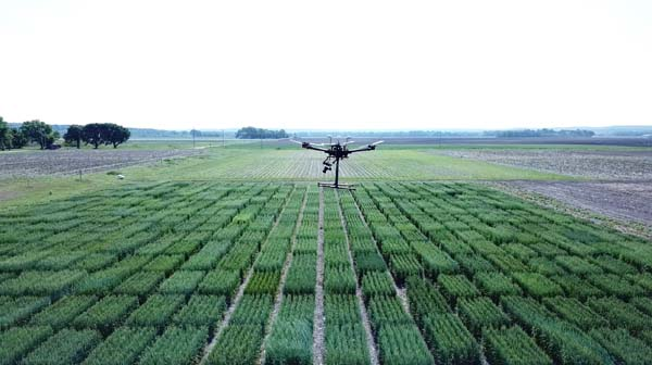 Various colors of green wheat stalks in patterns with drone hovering above
