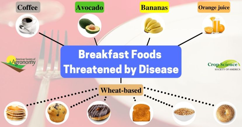 Graphic of breakfast foods threatened by disease