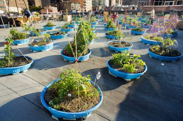 earth-day-urban-farming-kiddie-pools_51629_600x450