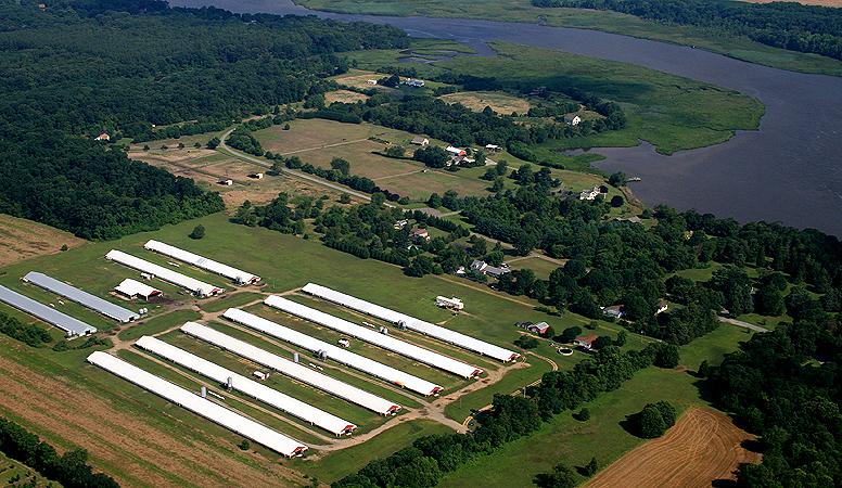 Conventional Farm