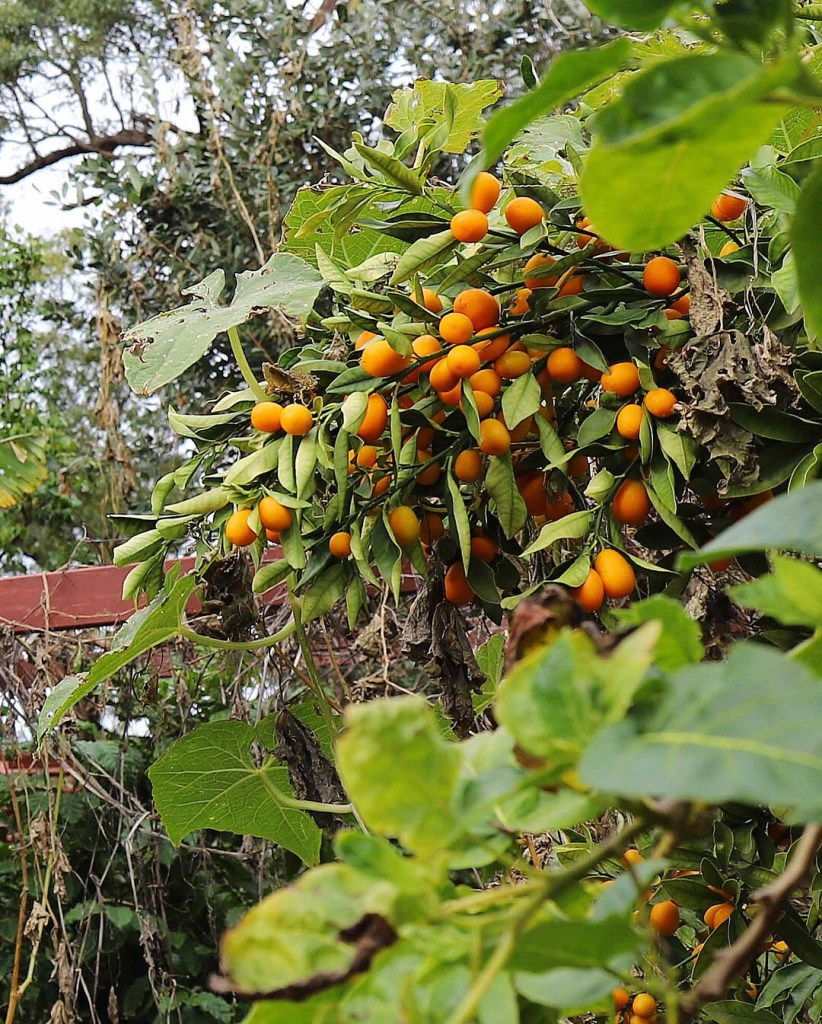 self-sufficient fruit trees