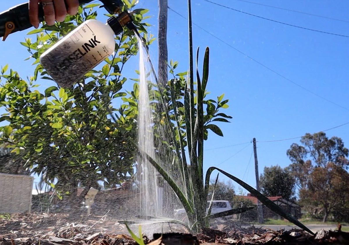 Weed Tea fertilizer