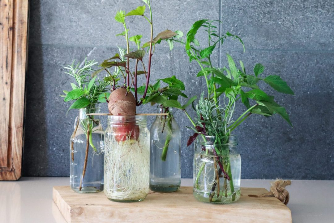 grow from cuttings