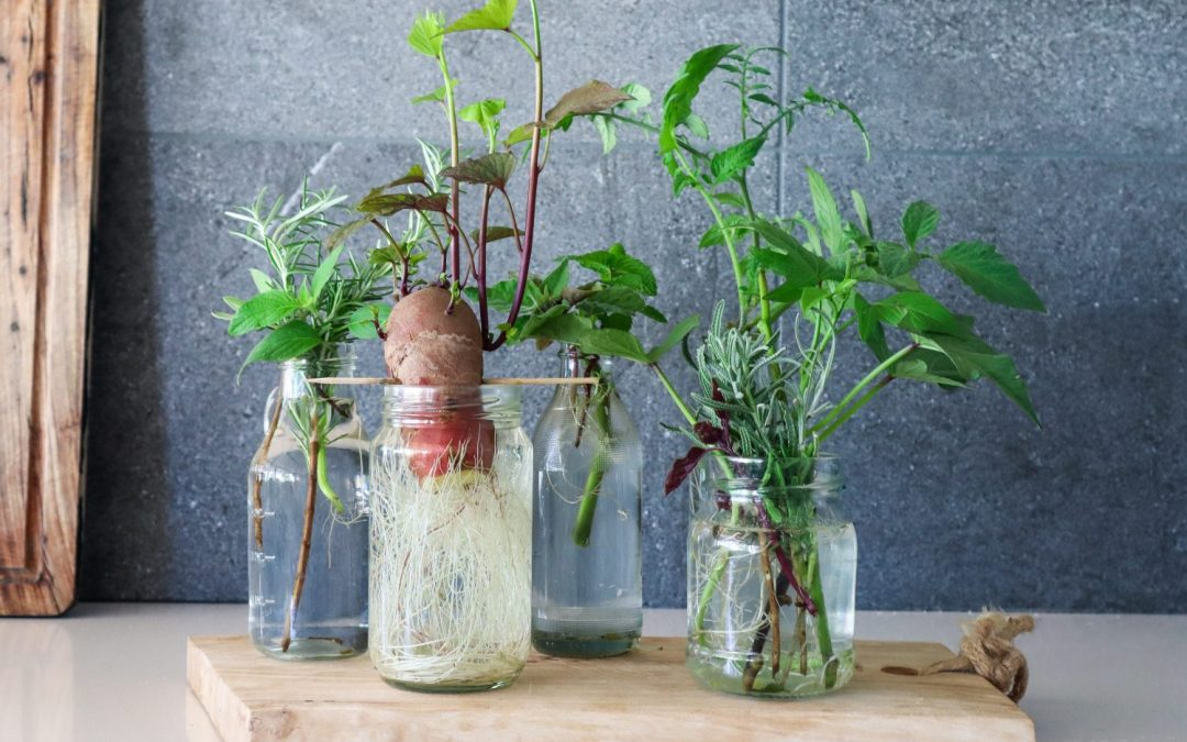 Grow Food From Cuttings