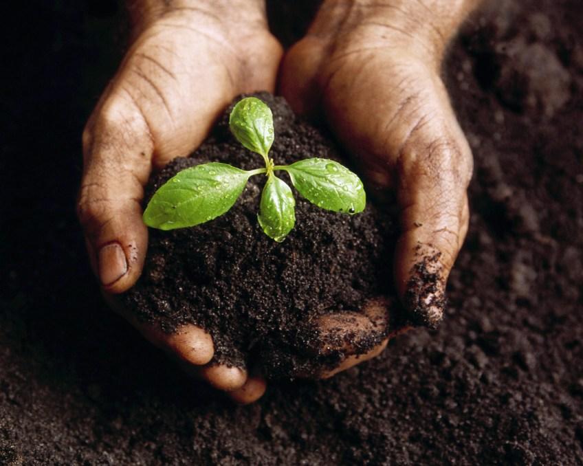 Картинки по запросу плодородие почв