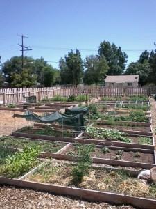 Mills Community Garden beds