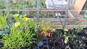 Mills Community Garden bedding plants