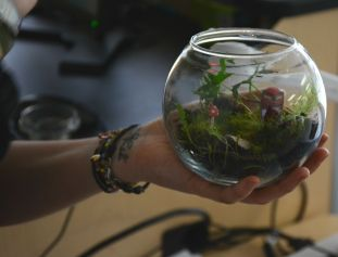 A completed terrarium example. (Image courtesy of Mitch Prentice.)