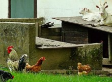 5 things you should know about homesteading