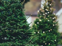 How to recycle your Christmas tree